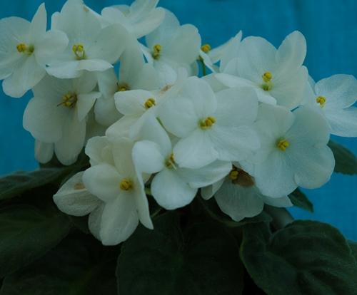 137797-Flores